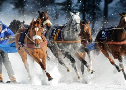 Zirgu Skijorings