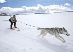 Suņu Skijorings